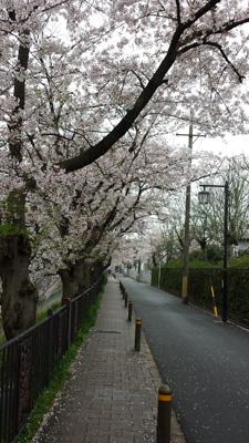 yamazakigawa20150403_1.jpg